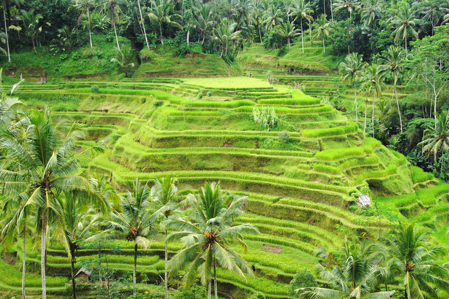 Abhirama-Bali-Tours23